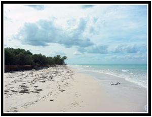 Playa Jutias (25k image)